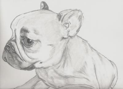 Monsieur le petshop passion des chevaux et du dessin - Dessin d animaux trop mignon ...